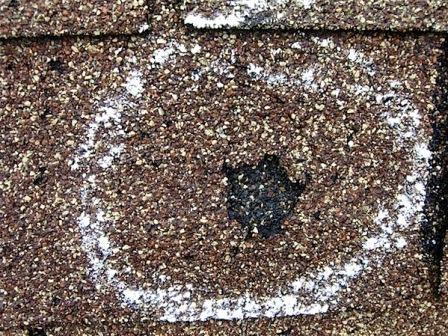 Hail damage in asphalt shingle not a blister